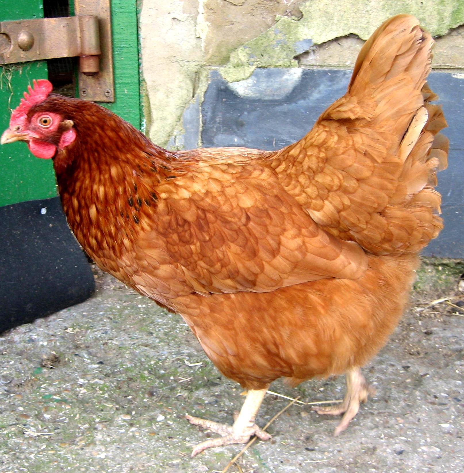 Spinach & Eggs From Spitalfields City Farm